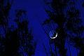 Luna creciente (4618047326).jpg