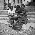 Lupljenje češp v Biljani 1953 (2).jpg