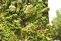 MADRID A.V.U. JARDIN VERTICAL PASEO DEL PRADO - panoramio (5).jpg