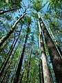 MOs810 WG 2018 8 Zaleczansko Slaski (Natural reserve Modrzewiowa Gora) (4).jpg