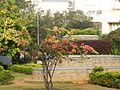 MS Ramaiah city south city south park.jpg