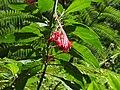 Madeira - Monte - Jardim Tropico (2093401290).jpg