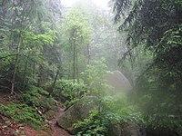 Malerweg sächsische Schweiz 1.JPG