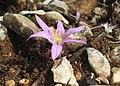 Mallorca Flower 1.jpg