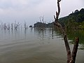 Mangrove at High Tide (15789273466).jpg
