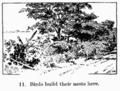 Manual of Gardening fig011.png