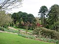Markinch , Balbirnie Park, looking to Monkey Puzzle Trees - geograph.org.uk - 93299.jpg