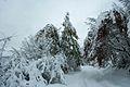 Marzano Appio - Strada verso Roccamonfina in inverno.jpg