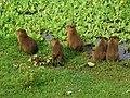 Mato Grosso do Sul - Pantanal 03.jpg