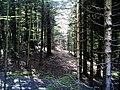 May Greenwood Hochschwarzwald Mount Kandel 1300 mtr wilderness - Master Mythos Black Forest Photography 2013 former bear land - panoramio.jpg