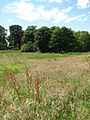 Meadow beside the footpath along the River Bure - geograph.org.uk - 863964.jpg