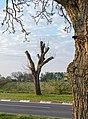 Meckenheim (Pfalz) Böhler Straße 003 2020 04 09.jpg
