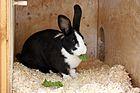 Mellerud rabbit.jpeg