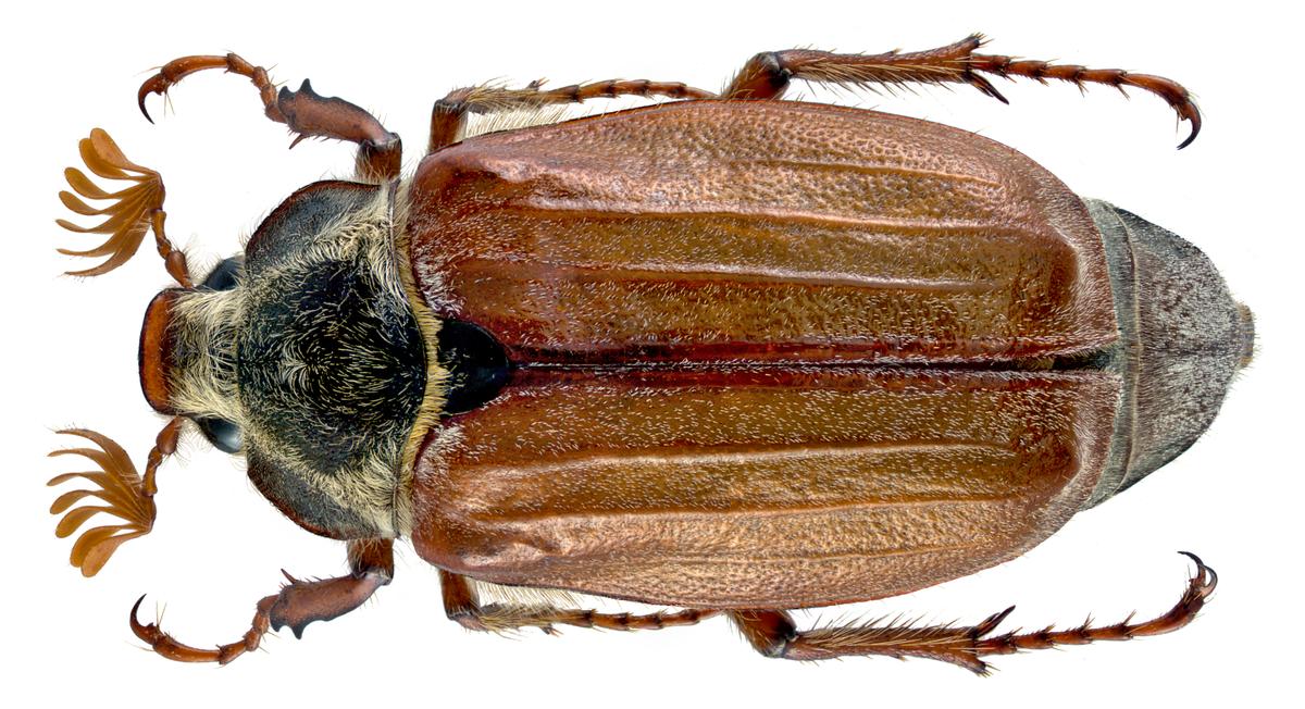 то, майский жук анимация социальной сети