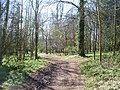 Mid Devon , Knightshayes - Impey Walk - geograph.org.uk - 1271589.jpg