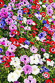 Mixed flowers at Akashi Kaikyo National Government Park.jpg