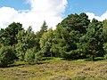 Mixed woodland, near Portmore Loch - geograph.org.uk - 212275.jpg