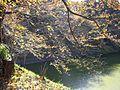 Moat and tree sideward at Tayasu gate.JPG