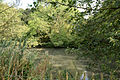 Moated site of Clayton Hall, adjacent fishponds and channels - fish pond to north.jpg