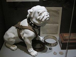 Model of Pelorus Jack at the Auckland Museum.JPG