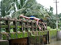Monsoon Hangama Malappuram Kerala (222983295).jpg