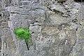 Moss Growing on Bridport Sands - geograph.org.uk - 765242.jpg