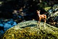 Mossy Foal (32203941).jpeg