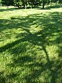 Mowed - mounded P6230337.jpg