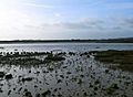 Mudbank, River Adur - geograph.org.uk - 277491.jpg