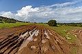Muddy road in Akamas Peninsula, Cyprus.jpg