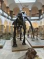 Munich Paleontology Museum main gallery.jpg