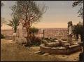Museum garden, Carthage, Tunisia-LCCN2001699366.tif