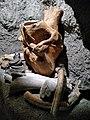 Museum of the History of Boguslav Region (Ukraine) Музей історії Богуславщини (Україна) (50170576392).jpg