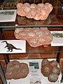 Muzeum Ziemi w Kletnie.jpg
