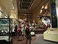 Muzeum przyrodnicze 07.jpg