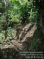 My garden 01.jpg