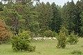 NSG Kraftstein-5683.jpg