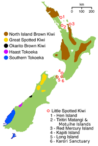 The distribution of each species of kiwi
