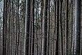 Nationalpark Bayerischer Wald 1.jpg