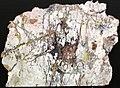 Native copper stockwork in skarn rock (Madison Gold Skarn Deposit, Late Cretaceous, 80 Ma; west of Silver Star, Montana, USA) 4.jpg