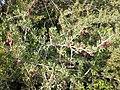 Nature des Monts Beni Chougranes Mohammadia 25.jpg