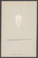 Nelocira - Print - Iconographia Zoologica - Special Collections University of Amsterdam - UBAINV0274 006 03 0060.tif