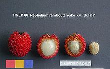 rode vrucht met stekels