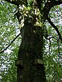 Nesting boxes, Nant-y-Coy - geograph.org.uk - 1011660.jpg