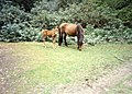 New Forest, Hampshire (150191) (9456056096).jpg