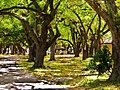 Nice walking trail at TY Park. Belle oasis au centre ville le TY Park à Hollywood,Fl. - panoramio.jpg