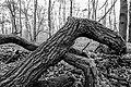 Nordkirchen, Naturschutzgebiet Ichterloh -- 2018 -- 2094-99 (bw).jpg