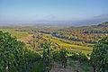 Northern Wuerttemberg vineyards.jpg