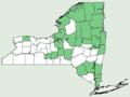 Nuphar pumila NY-dist-map.png