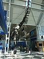ORD Brachiosaurus altithorax P1000282.jpg